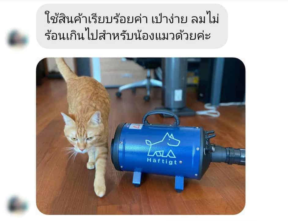 ไดร์เป่าขนแมว