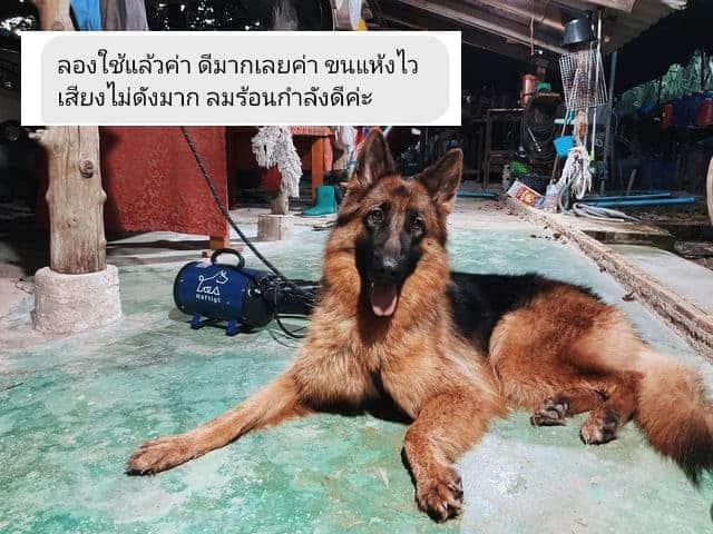 ไดร์เป่าขนสุนัข เครื่องเป่าขนสุนัข