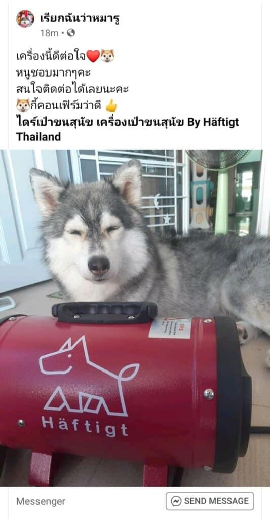ไดร์เป่าขนสุนัข Haftigt รีวิว